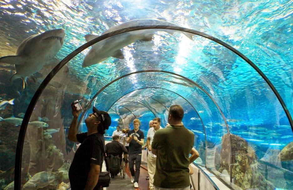 Visitantes no L'Aquarium de Barcelona