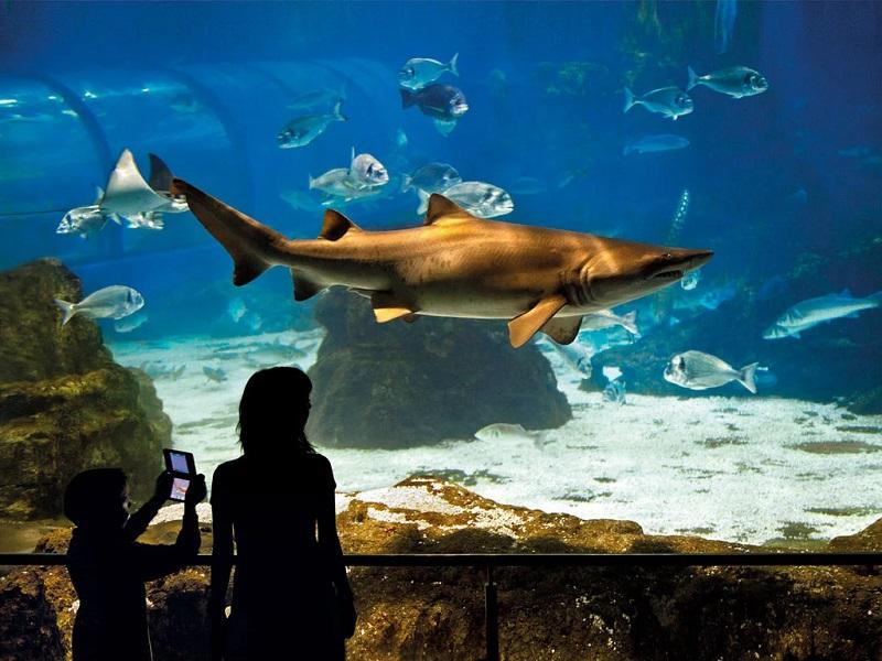 L'Aquarium de Barcelona | Espanha