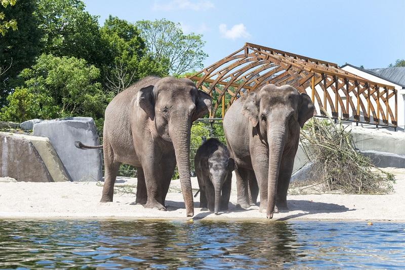 Zoológico Real de Artis na Holanda