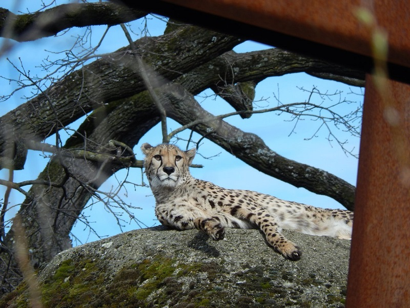 Zoológico de Basileia | Suiça