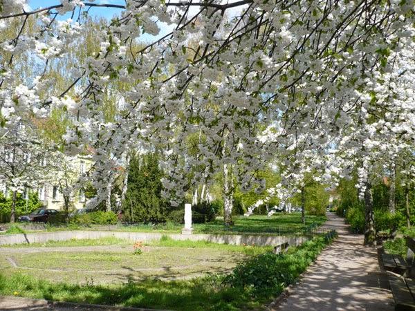 Flores em parque