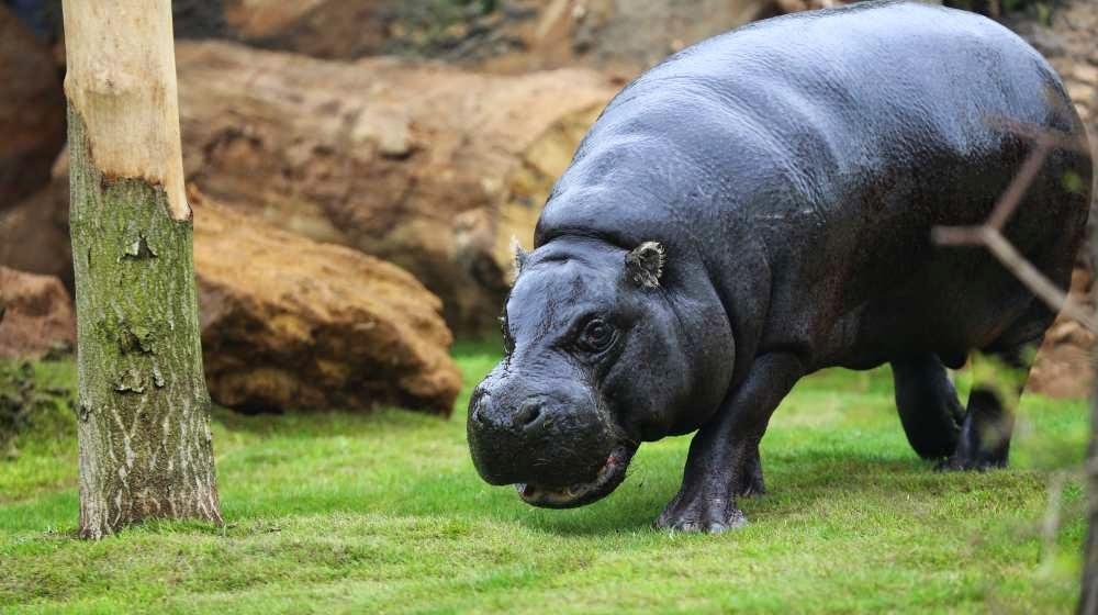 Animal no zoológico London Zoo em Londres