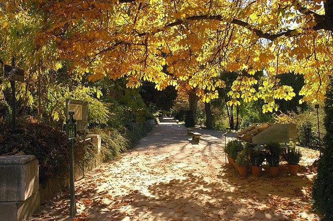 Árvores no Real Jardín Botánico em Madri