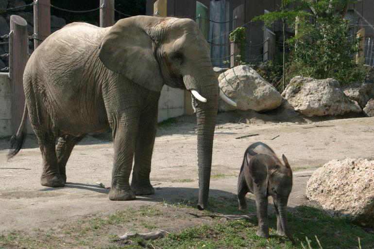 Zoológico Tiergarten Schönbrunn em Viena