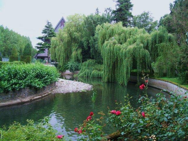Jardim Botânico de Dublin | Irlanda