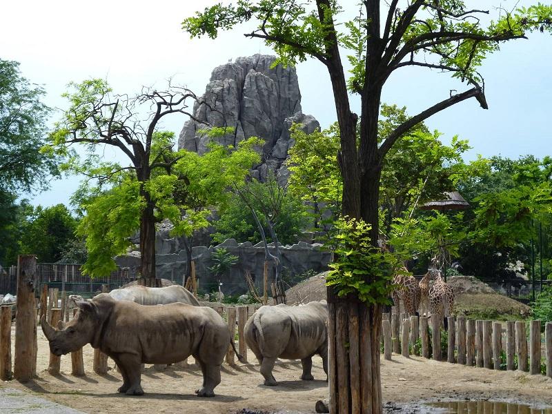 Animais do Zoológico de Budapeste